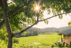 Меньший дом на поле риса Стоковая Фотография RF