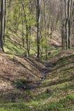 Меньший поток горы Стоковое Изображение