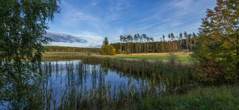 Меньший пруд с деревьями и лугом Стоковая Фотография RF