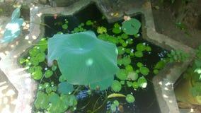 Меньший пруд Стоковые Изображения RF