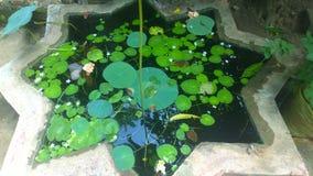 Меньший пруд Стоковые Фотографии RF