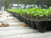 Меньший росток в пластичном баке в саде Стоковое Изображение