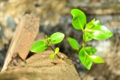 Меньший рост дерева стоковые изображения rf