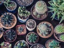 Меньший сад кактуса стоковое фото