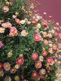 меньший солнцецвет стоковые фото