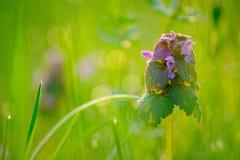 Меньший цветок в зеленой траве стоковые фотографии rf
