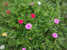 Меньший цветок в саде Стоковое Изображение
