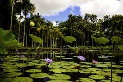 Меньший цветок озера стоковое фото