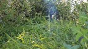 Меньший дым от лагерного костера акции видеоматериалы