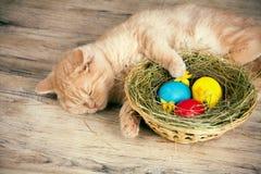 Маленький кот около корзины с покрашенными яичками Стоковая Фотография RF