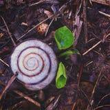 меньшяя весна Стоковое фото RF