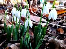меньшяя весна Стоковая Фотография