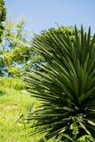меньшяя пальма стоковая фотография