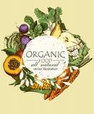 Меню натуральных продуктов Комплект овощей, плодоовощей и специй Еда фермы плакат меню бесплатная иллюстрация