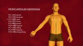Меридиан перикардия, 3D иллюстрация, иглоукалывание видеоматериал