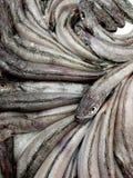 Мерлузы в рыночный мест с художественной точки зрения стоковые фотографии rf