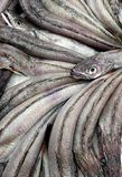Мерлузы в рыночный мест с художественной точки зрения стоковое изображение