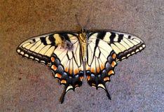 Мертвая бабочка Стоковые Фотографии RF