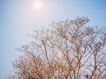 Мертвая ветвь дерева с голубым небом Стоковые Фото
