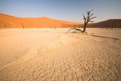мертвая долина Стоковые Изображения