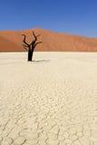 мертвая долина sossusvlei nanib ландшафта пустыни Стоковые Фотографии RF