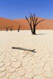 мертвая долина sossusvlei nanib ландшафта пустыни Стоковые Фото