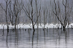 мертвая зима Стоковая Фотография