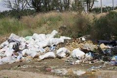 Мертвая корова в свалке мусора Стоковое Изображение RF