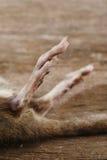 мертвая крыса Стоковые Изображения