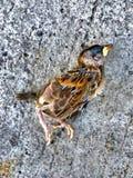 Мертвая маленькая птица Стоковые Фотографии RF