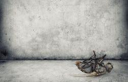 Мертвая муха Стоковая Фотография RF