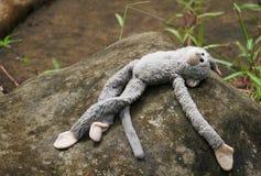 Мертвая обезьяна Стоковые Фото