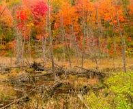 Мертвая осень дерева Стоковая Фотография RF
