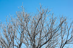 Мертвая предпосылка неба деревьев Стоковая Фотография RF