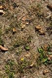 Мертвая природа предпосылки текстуры Брайна осени травы Outdoors Стоковые Изображения RF