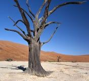 Мертвая пустыня Vle - Namib - Намибия Стоковые Фото