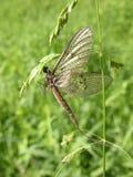 Мертвая дракон-муха Стоковая Фотография