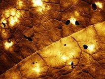 мертвая распаденная структура листьев ii стоковое изображение