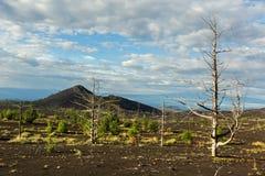Мертвая древесина - последствие катастрофического отпуска золы во время извержения вулкана в Tolbachik 1975 северном стоковое фото rf