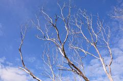 мертвая древесина Стоковая Фотография