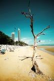Мертвая скульптура дерева Стоковое Изображение RF