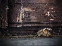 Мертвая сумеречница Стоковое Фото