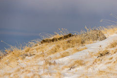 Мертвая трава стоковая фотография