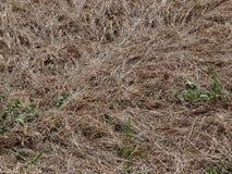мертвая трава Стоковые Изображения