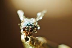 Мертвая унылая муха Стоковая Фотография