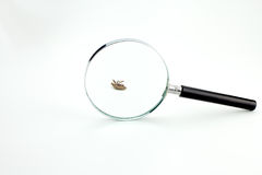 Мертвая черепашка Стоковое фото RF