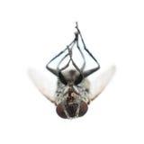 мертвая черная муха изолированная на белизне Стоковая Фотография RF