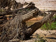 Мертвое дерево в заводи Стоковое Изображение