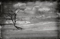 Мертвое дерево в неурожайном ландшафте пустыни Стоковые Фотографии RF