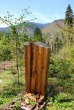 Мертвое дерево отрезка на предпосылке природы Стоковое фото RF